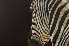 Zebra in the dark 2, 35 x 50 cm -SOLD