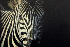 Zebra in the dark 1, 35 x 50 cm -SOLD