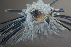 Secretairy bird 20x50 cm - kleurpotlood